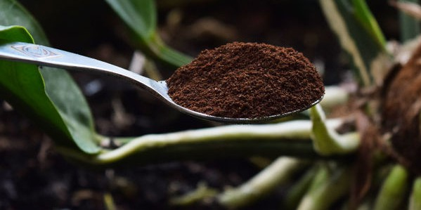 670px-Use-Coffee-Grounds-in-Your-Garden-Step-1-Version-3